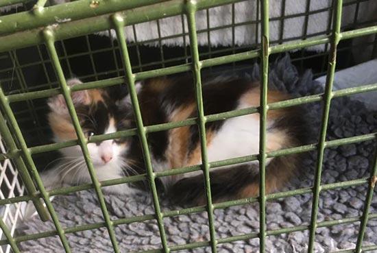 STUDY OF A SLEEPING SLEEPY CAT KITTEN PET ANIMAL ART PAINTING REAL CANVAS PRINT